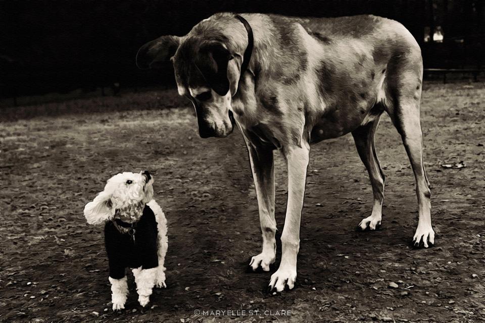 small-dog-big-dog-art-portrait
